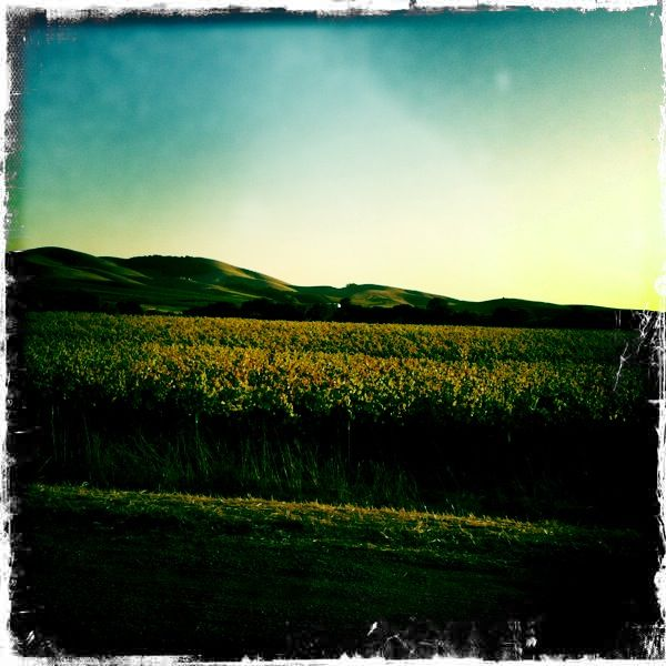 Hipstamatic Wine Country 1