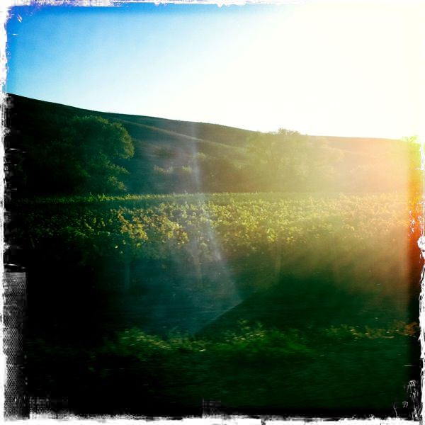 Hipstamatic Wine Country 2